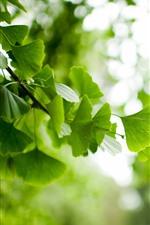 Folhas verdes, galhos, nebuloso