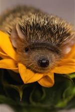 Preview iPhone wallpaper Hedgehog, sunflower, yellow petals