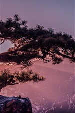 Preview iPhone wallpaper Huangshan, cliff pine tree