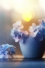 미리보기 iPhone 배경 화면 수국, 꽃잎, 컵, 흐릿한