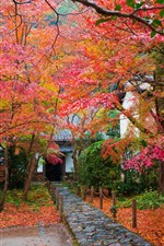 Preview iPhone wallpaper Japan, trees, red maple leaves, autumn, house, garden