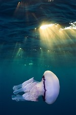 Jellyfish, underwater, sea, sunlight