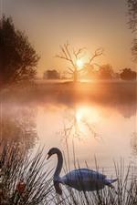 Preview iPhone wallpaper Lake, swan, grass, sunrise, fog, morning