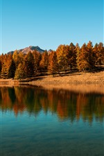 Lake, trees, blue sky, water reflection, autumn