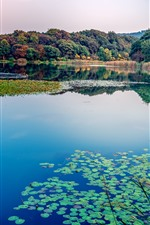 Preview iPhone wallpaper Lake, water lily, trees, nature landscape