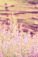 iPhone壁紙のプレビュー ラベンダー、ピンクの花、曇り、夏