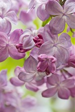 Preview iPhone wallpaper Lilac, spring flowers
