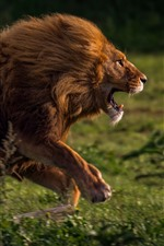 Preview iPhone wallpaper Lion running, speed