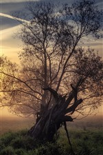 Preview iPhone wallpaper Lonely tree, grass, sunrise, fog, morning