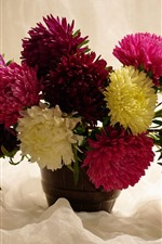 Preview iPhone wallpaper Many chrysanthemum, pink, red, yellow