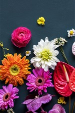 Many kinds of flowers, colorful
