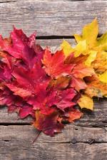 Maple leaves love heart