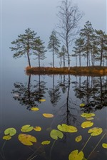 Preview iPhone wallpaper Morning, lake, trees, water reflection, fog