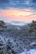 Mountain top, forest, trees, snow, winter