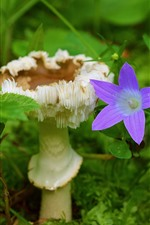 Preview iPhone wallpaper Mushroom and purple flower