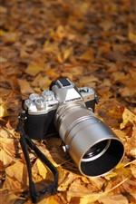 Câmera Olympus, folhas amarelas