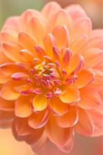 Preview iPhone wallpaper Orange dahlia, flower close-up, blurry background