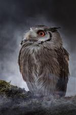 Owl, look, darkness