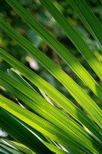 Preview iPhone wallpaper Palm tree leaves, green