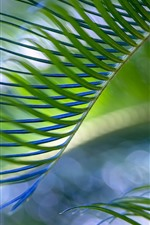 Palm tree leaves, hazy