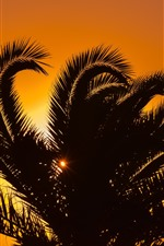 Preview iPhone wallpaper Palm tree, leaves, silhouette, sunset