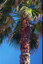 Preview iPhone wallpaper Palm trees, blue sky