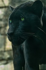Preview iPhone wallpaper Panther, green eyes, wildlife