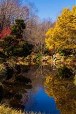 Park, pond, trees, autumn