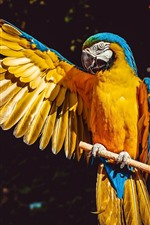 Preview iPhone wallpaper Parrot open one wing, macaw