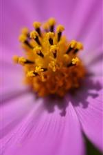 iPhone壁紙のプレビュー ピンクの花マクロ写真、花びらのクローズアップ