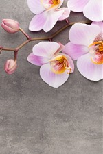 Preview iPhone wallpaper Pink phalaenopsis, flowers close-up