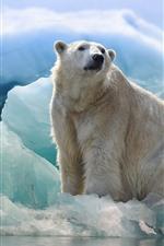 Preview iPhone wallpaper Polar bear and penguin, iceberg