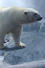 Polar bear, snow, iceberg