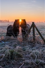 Preview iPhone wallpaper Pony, grass, frost, fence, winter, sunrise