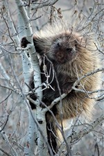 Preview iPhone wallpaper Porcupine in the tree