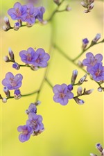 Preview iPhone wallpaper Purple flowers, twigs, spring, hazy