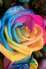 Preview iPhone wallpaper Rainbow color roses, petals, colorful