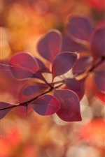 Preview iPhone wallpaper Red leaves, twigs, hazy, autumn
