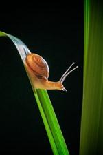 미리보기 iPhone 배경 화면 달팽이, 곤충, 푸른 잔디, 검정색 배경