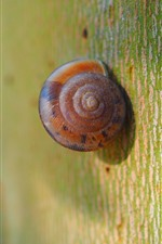 Preview iPhone wallpaper Snail macro photography, tree