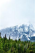 montanhas nevadas, floresta, nevoeiro