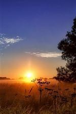 Preview iPhone wallpaper Summer, trees, grass, sunset