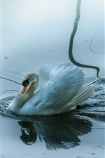 Preview iPhone wallpaper Swan, bird, water, pond