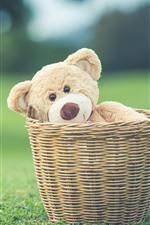 Teddy bear in basket, green meadow