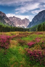 Preview iPhone wallpaper The Dolomites, Alps, mountains, forest, grass, wildflowers