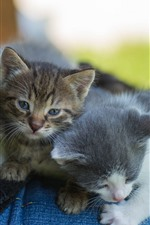 Preview iPhone wallpaper Three cute kittens, pet