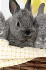 Preview iPhone wallpaper Three gray rabbits, basket