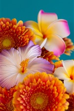 Preview iPhone wallpaper Three kinds flowers, gerbera, plumeria, hibiscus