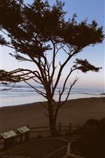 Tree, beach, sea, dusk