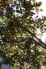Tree, leaves, twigs, sunlight